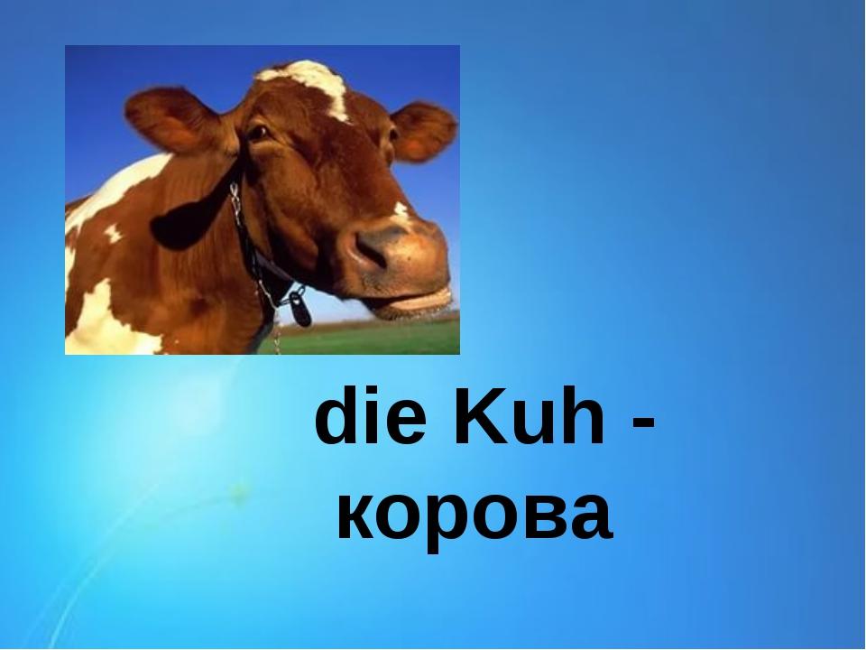 die Kuh - корова