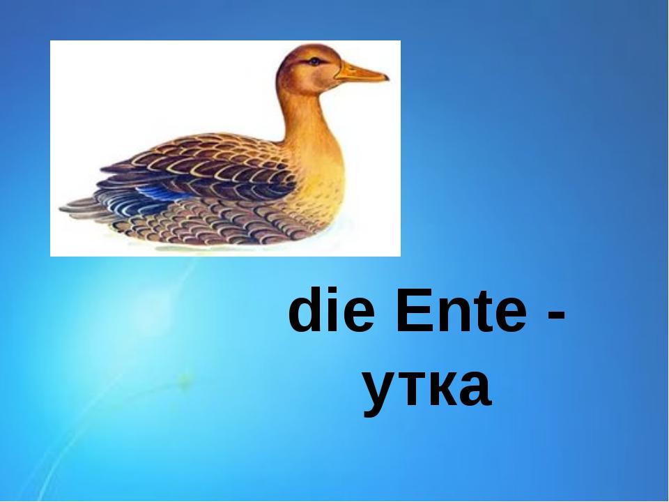die Ente - утка