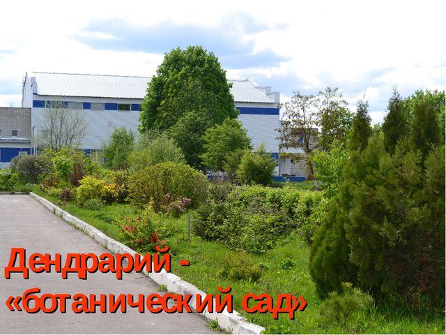 Дендрарий - «ботанический сад»