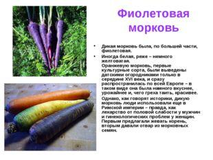 Фиолетовая морковь Дикая морковь была, по большей части, фиолетовая. Иногда б