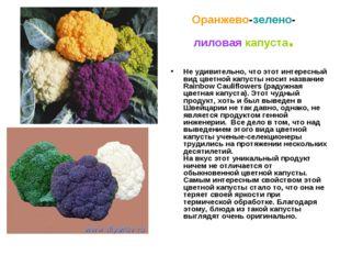 Оранжево-зелено-лиловая капуста. Не удивительно, что этот интересный вид цвет
