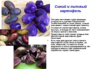 Синий и лиловый картофель . Эти два настоящих чуда природы относятся к сортам