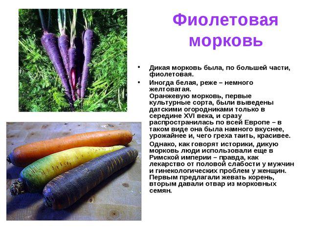 Фиолетовая морковь Дикая морковь была, по большей части, фиолетовая. Иногда б...