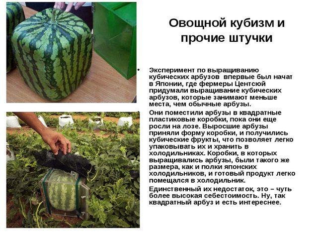 Овощной кубизм и прочие штучки Экспериментпо выращиванию кубических арбузов...