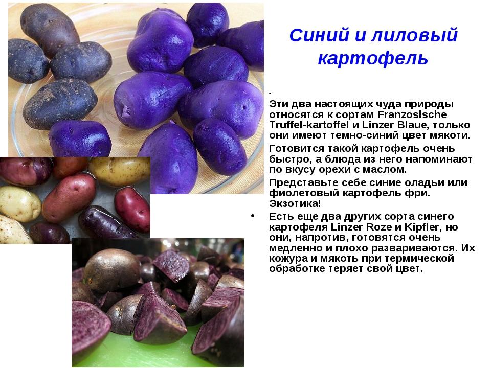 Синий и лиловый картофель . Эти два настоящих чуда природы относятся к сортам...
