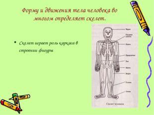 Форму и движения тела человека во многом определяет скелет. Скелет играет рол