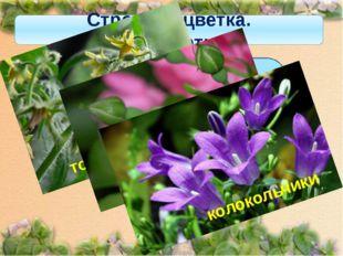 Строение цветка. Околоцветник Если околоцветник состоит из чашечки и венчика,