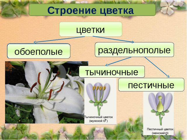 Строение цветка цветки обоеполые раздельнополые обоеполые тычиночные пестичные