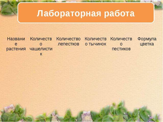 Лабораторная работа Название растения Количество чашелистик Количество лепест...