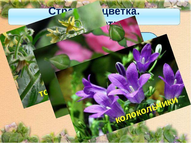 Строение цветка. Околоцветник Если околоцветник состоит из чашечки и венчика,...