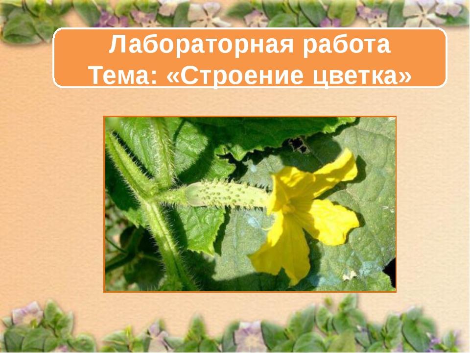 Лабораторная работа Тема: «Строение цветка»