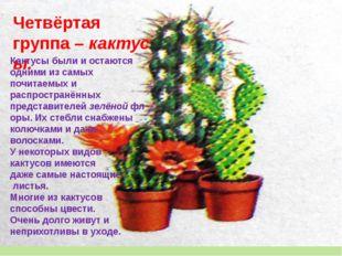 Четвёртая группа–кактусы. Кактусы были и остаются одними из самых почитаемы