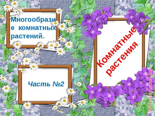 Комнатные растения. Часть №2 Многообразие комнатных растений.