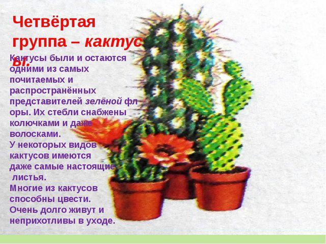 Четвёртая группа–кактусы. Кактусы были и остаются одними из самых почитаемы...