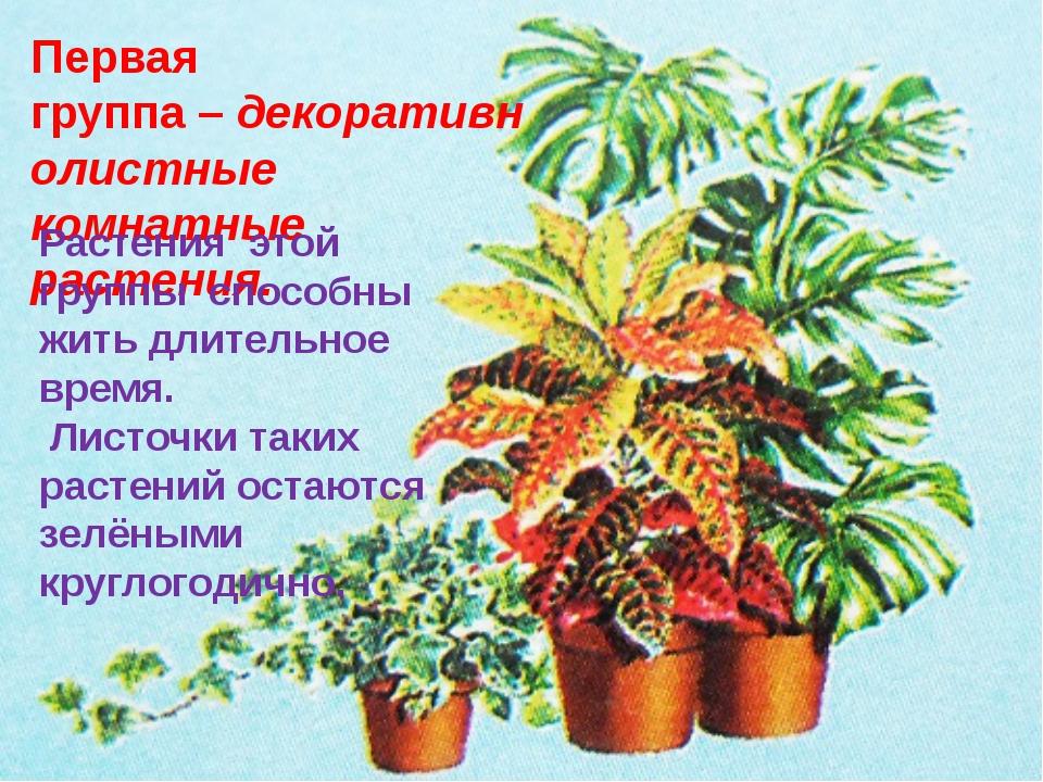 Первая группа–декоративнолистные комнатные растения. Растения этой группы с...