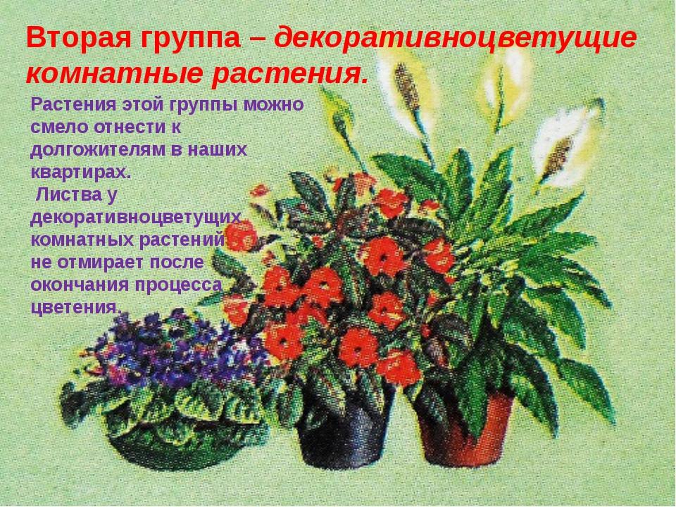Вторая группа–декоративноцветущие комнатные растения. Растения этой группы...