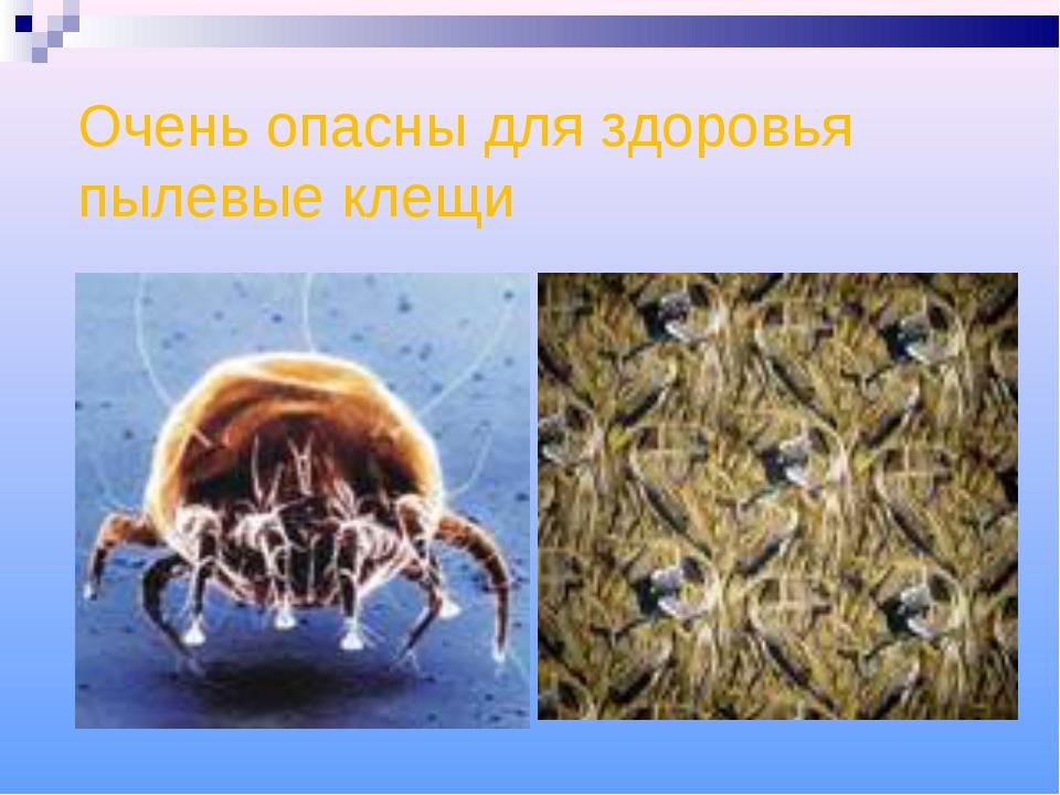 Очень опасны для здоровья пылевые клещи
