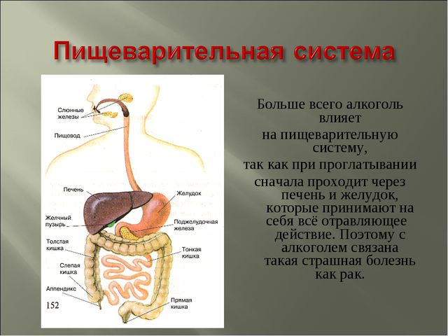 Больше всего алкоголь влияет на пищеварительную систему, так как при проглаты...