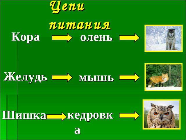 Цепи питания Кора Желудь Шишка мышь олень кедровка