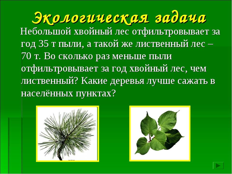 Небольшой хвойный лес отфильтровывает за год 35 т пыли, а такой же лиственны...