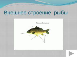 Внешнее строение рыбы Хвостовой плавник