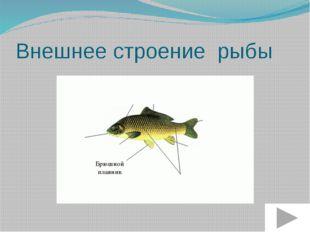 Внешнее строение рыбы Боковая линия