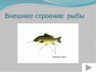 Внешнее строение рыбы Рот