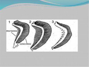 Размножение и развитие рыб 14