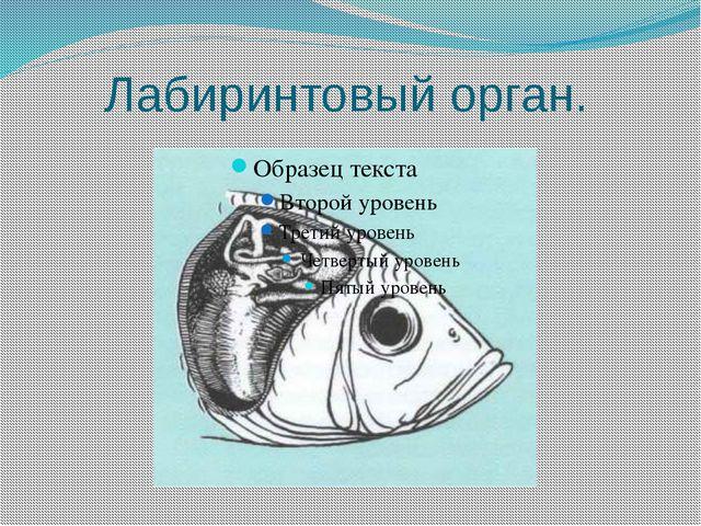 Внешнее строение рыбы Спинной плавник