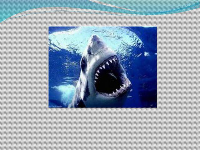? Какие особенности внутреннего строения помогают рыбе жить в воде 3