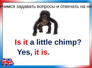 Is it a little chimp? Yes, it is. Учимся задавать вопросы и отвечать на них