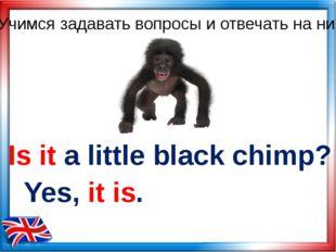 Is it a little black chimp? Yes, it is. Учимся задавать вопросы и отвечать на