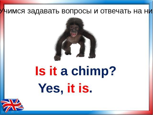 Is it a chimp? Yes, it is. Учимся задавать вопросы и отвечать на них