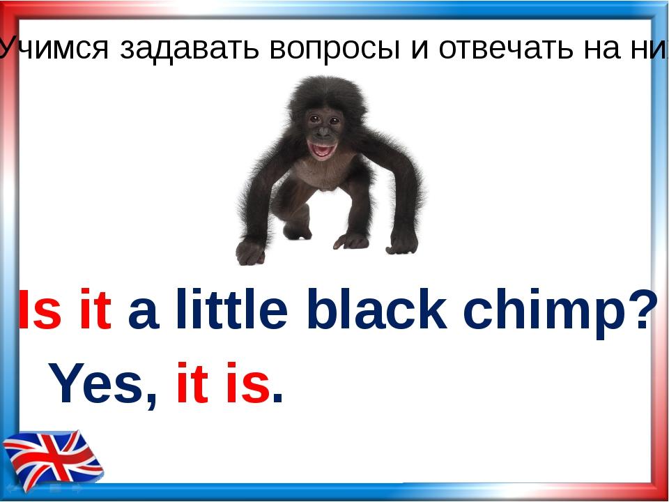Is it a little black chimp? Yes, it is. Учимся задавать вопросы и отвечать на...