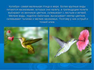 Колибри- самая маленькая птица в мире. Более крупные виды питаются насекомыми