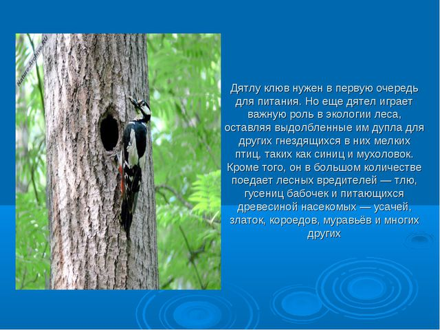 Презентация на тему:  птичьи клювы