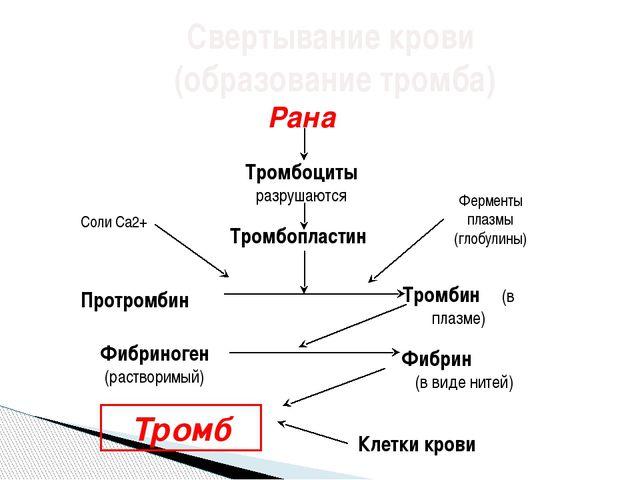 Свертывание крови (образование тромба) Рана Тромбоциты разрушаются Тромбоплас...