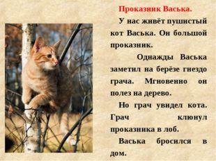 Проказник Васька. У нас живёт пушистый кот Васька. Он большой проказник. О