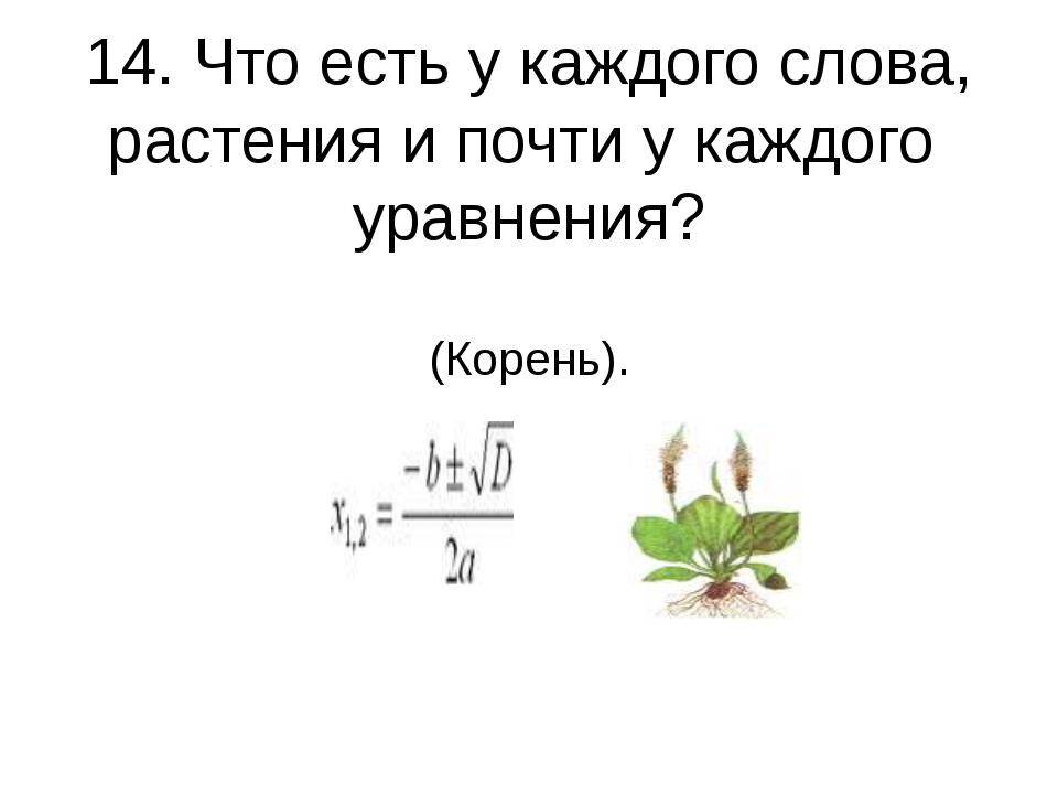 14. Что есть у каждого слова, растения и почти у каждого уравнения? (Корень).