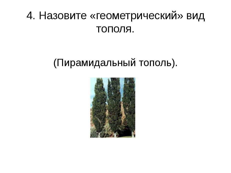 4. Назовите «геометрический» вид тополя. (Пирамидальный тополь).