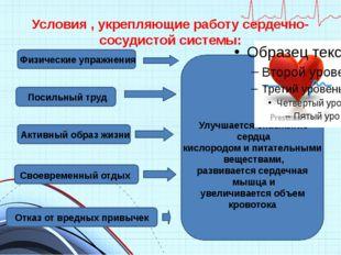 Условия , укрепляющие работу сердечно-сосудистой системы: Физические упражнен