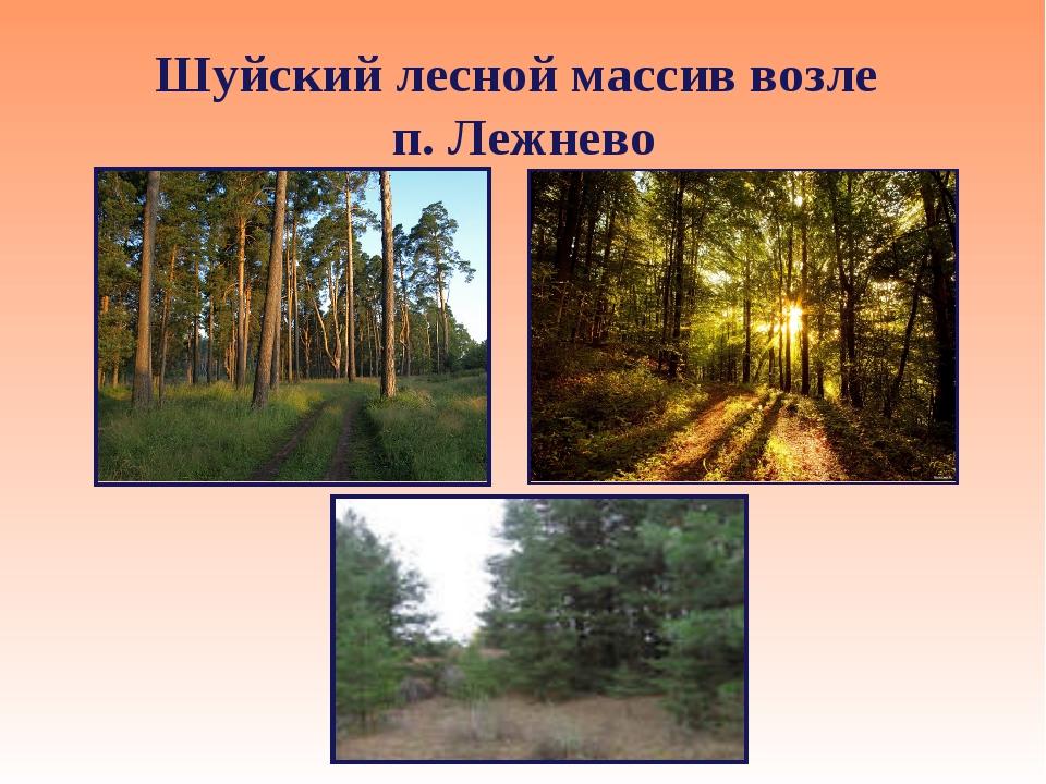 Шуйский лесной массив возле п. Лежнево