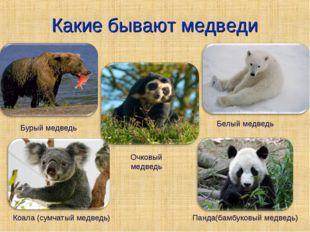 Какие бывают медведи Белый медведь Бурый медведь Коала (сумчатый медведь) Пан