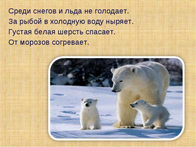 Среди снегов и льда не голодает. За рыбой в холодную воду ныряет. Густая бела...