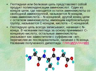 Пептидная или белковая цепь представляет собой продукт поликонденсации аминок
