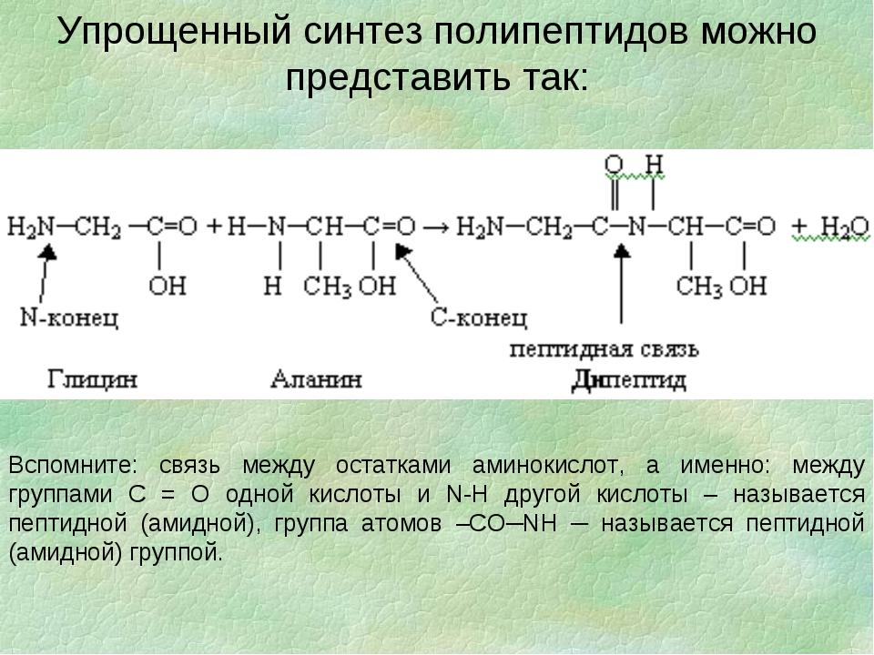 Упрощенный синтез полипептидов можно представить так: Вспомните: связь между...