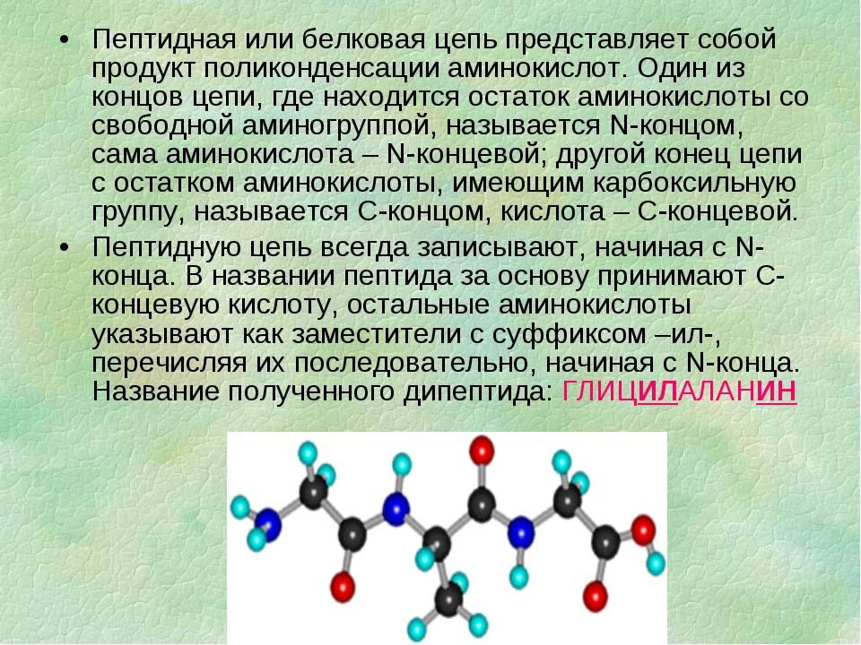 Пептидная или белковая цепь представляет собой продукт поликонденсации аминок...