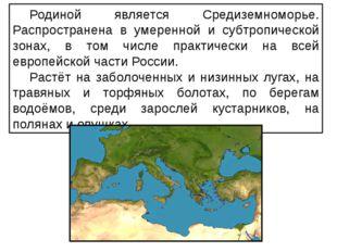 Родиной является Средиземноморье. Распространена в умеренной и субтропической