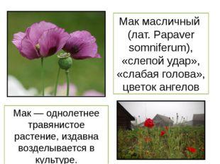 Мак масличный (лат. Papaver somniferum), «слепой удар», «слабая голова», цвет