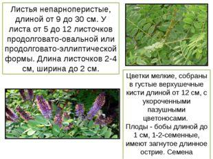 Листья непарноперистые, длиной от 9 до 30 см. У листа от 5 до 12 листочков пр
